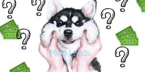 Giá chó Husky bao nhiêu