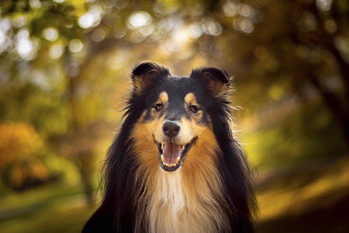 Điểm danh giống chó thông minh nhất thế giới