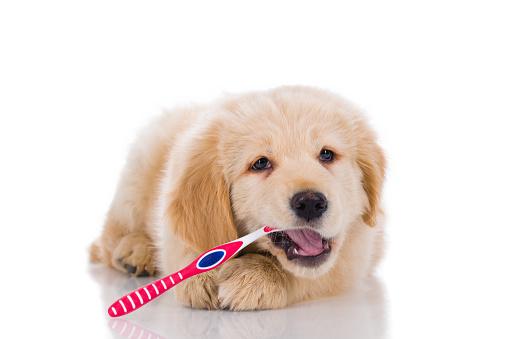 Chăm sóc răng cho chó bằng chế độ dinh dưỡng
