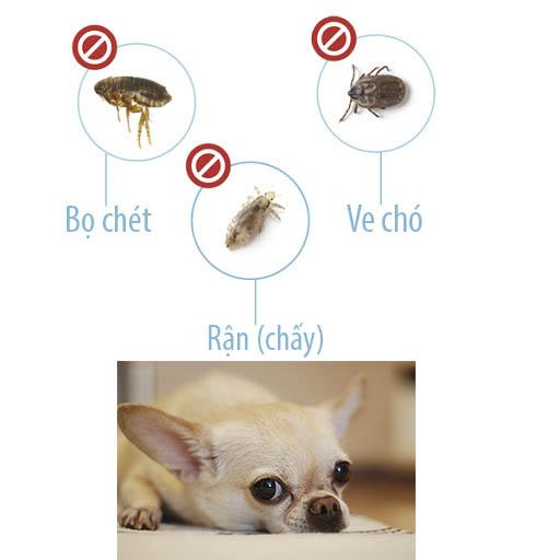 Phân biệt ve chó, rận chấy và bọ chét ở chó