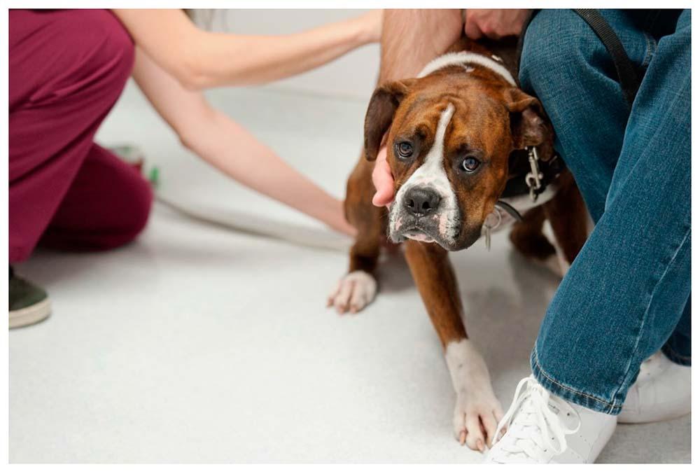 Chó sợ khi gặp bác sĩ thú y