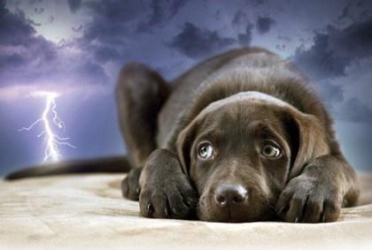 Chó sợ sấm sét, sợ mưa
