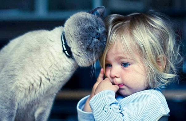 Nên nuôi mèo khi nhà có trẻ em không