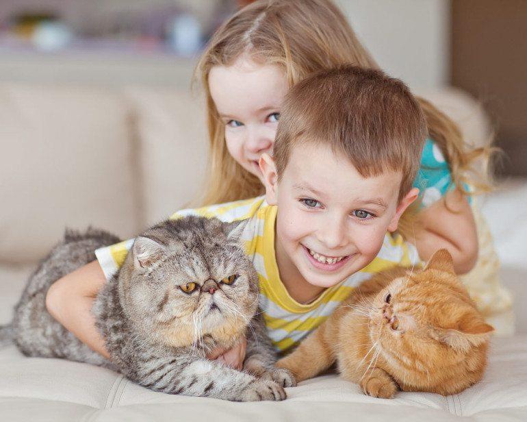 Nên nuôi mèo nào khi nhà có em bé