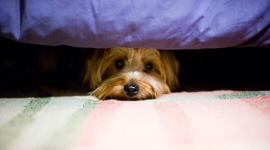 Những nỗi sợ ở chó