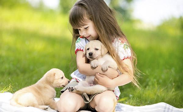 Ưu điểm của việc nuôi chó mèo khi nhà có trẻ con - akc