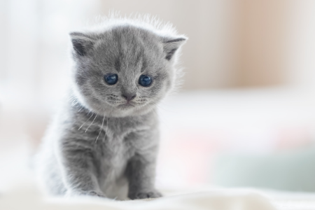 Vòng đời của mèo