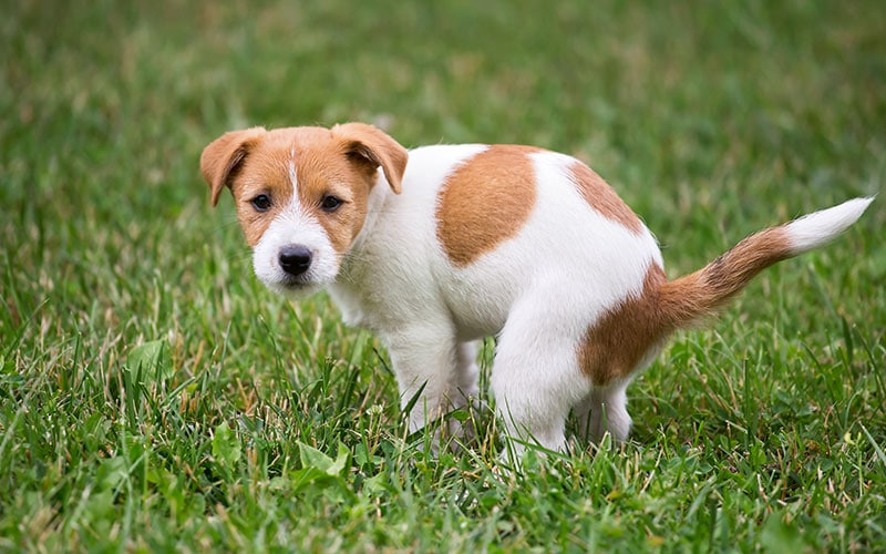 Chó bị tiêu chảy nên sử dụng thuốc gì