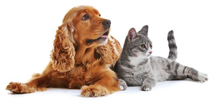 Những lý do nên nuôi chó trong nhà