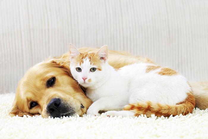 Tư vấn nên nuôi chó hay mèo trong nhà