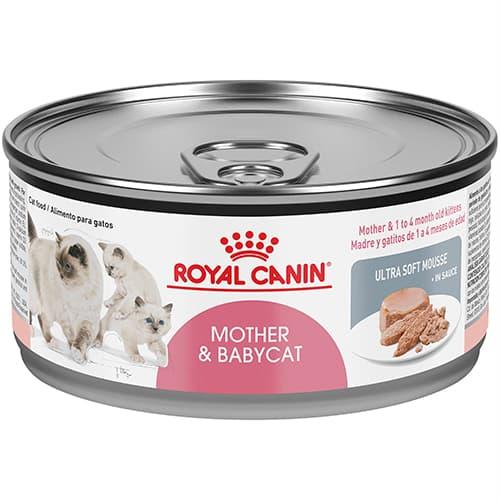 đánh giá thức ăn royal canin cho mèo sơ sinh và mèo mang thai