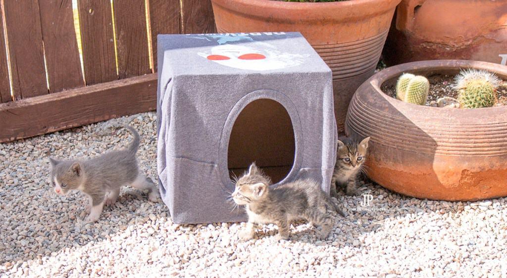 Mẫu nhà thùng giấy cho mèo 3