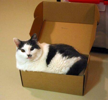 Mèo nằm trong hộp carton