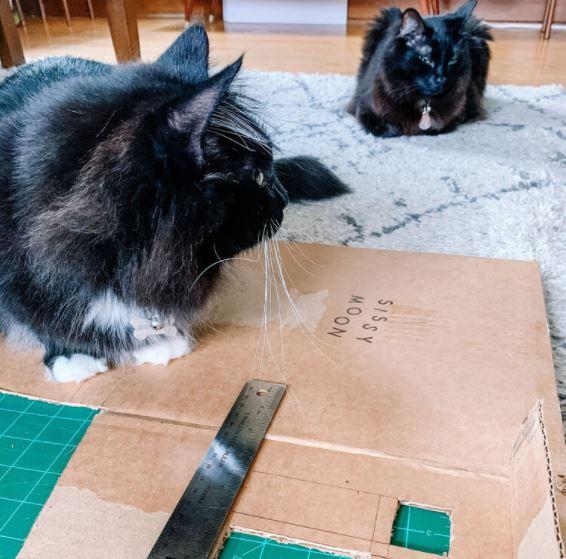 Nhờ mèo ra trợ giúp làm nhà giấy