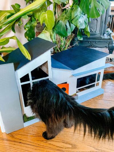 Tự làm nhà cho mèo bằng thùng các tông